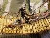 Python on Rope Bridge